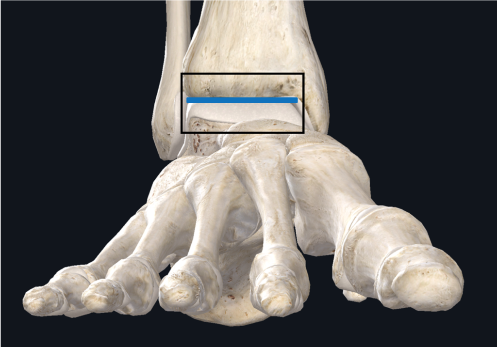 Text Box: Figure 09 3D illustration of the ankle joint